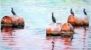 עגורים על חביות במים