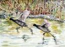 שתי ציפורים על נהר הירדן