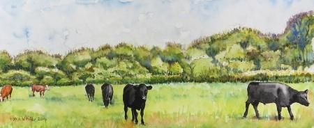 פרות במרעה