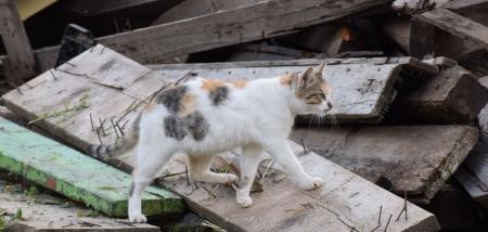 חתול על הקרשים