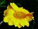 אלבום פרחים , התחדשות