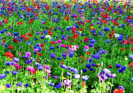 אלבום פרחים - שפע