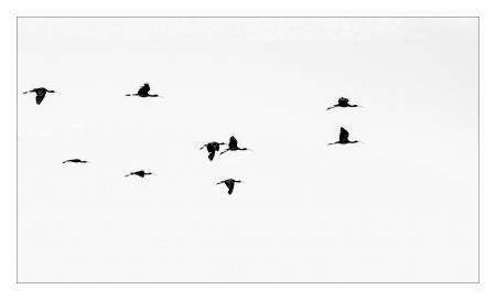 מעוף הציפור