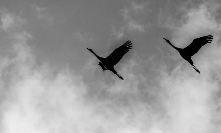 ציפורים2