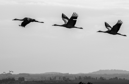 ציפורים 3