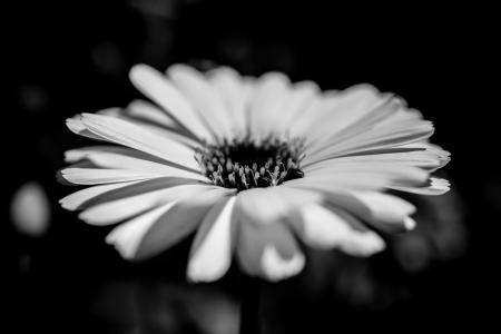 flower bw 1