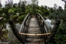 גשר חלומות