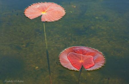 צמח במים