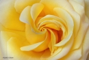 סיחרור צהוב