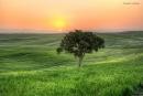 עץ בודד (HDR)