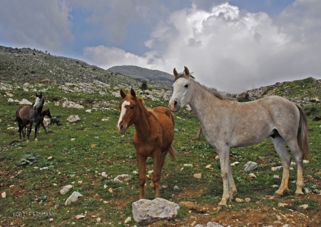 סוסים בהרים