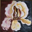 פרח אירוס 2