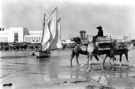 תל אביב 1939 - גמלים בחוף