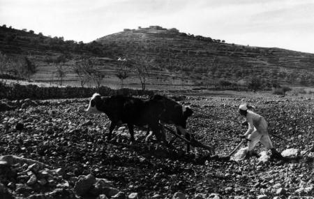דיר ניזאם 1947 - מחרשה