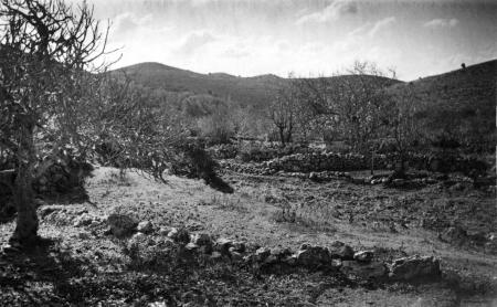 בוסתן פורח 1947