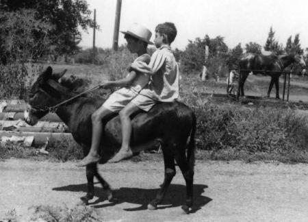 עין חרוד 1947 ילדים וחמור