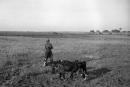 בית ג'ירג'יה 1940 רועה