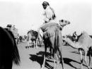 ג¶ירג¶ה 1940 מרוץ גמלים