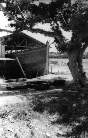 תל אביב 1937 סירה בצל עץ