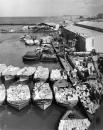 תל אביב 1937 סירות ומטען