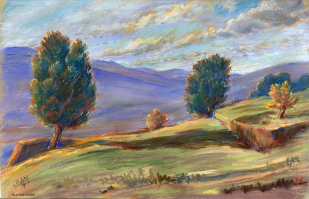 אורנים בהרי יהודה - 1950