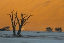 עצים על רקע דיונה