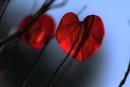 פעימות הלב