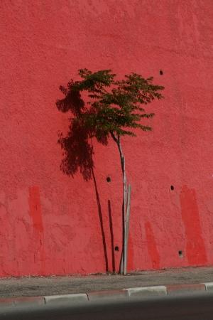 עץ על אדום
