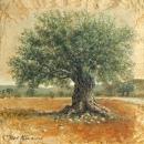 עץ הזית העתיק