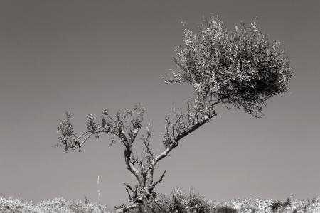 עץ שברירי