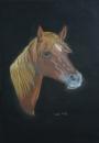 דיוקן סוס