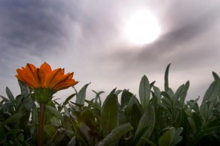 פרח ושמש