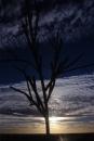עץ מברזל...