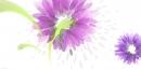 פרחי טיפות