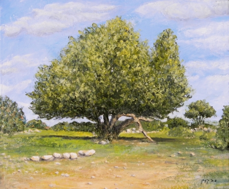 עץ החרוב העתיק