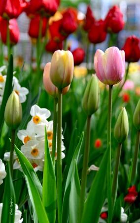 פרחים מהודרים
