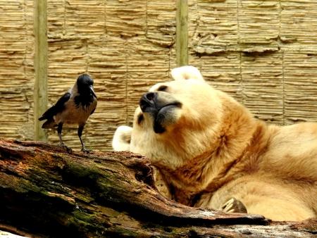 אחדות בטבע