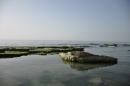ירוק בים