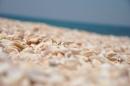 צדפים בחוף דור