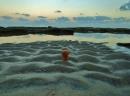 פקוק בים