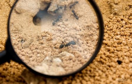 לך לנמלה עצל