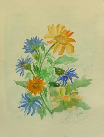 פרחי מרגנית