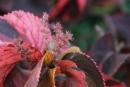 פרח בפארק הכט