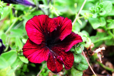 לב הפרח