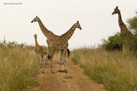 דוגמניות מאפריקה
