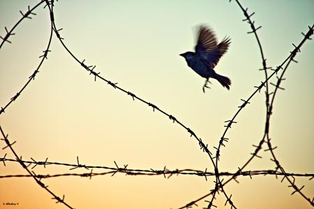 לחופש נולדה