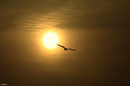 אל השמש