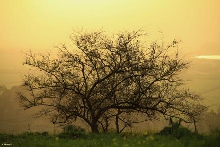 חוכמת העץ
