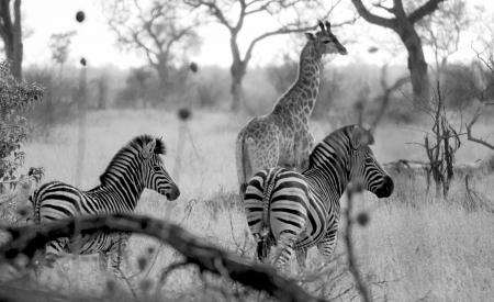 אחווה באפריקה