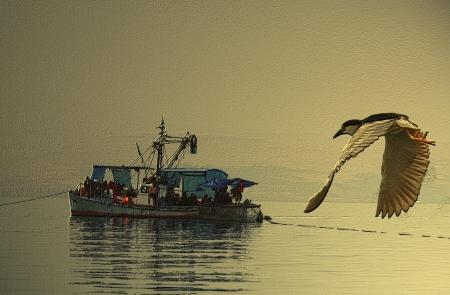 אנפה עורבת לדייג